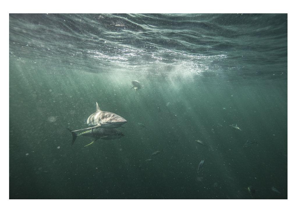 Pierre-BAELEN-Greenpeace-Amazon-Reef-2.jpg