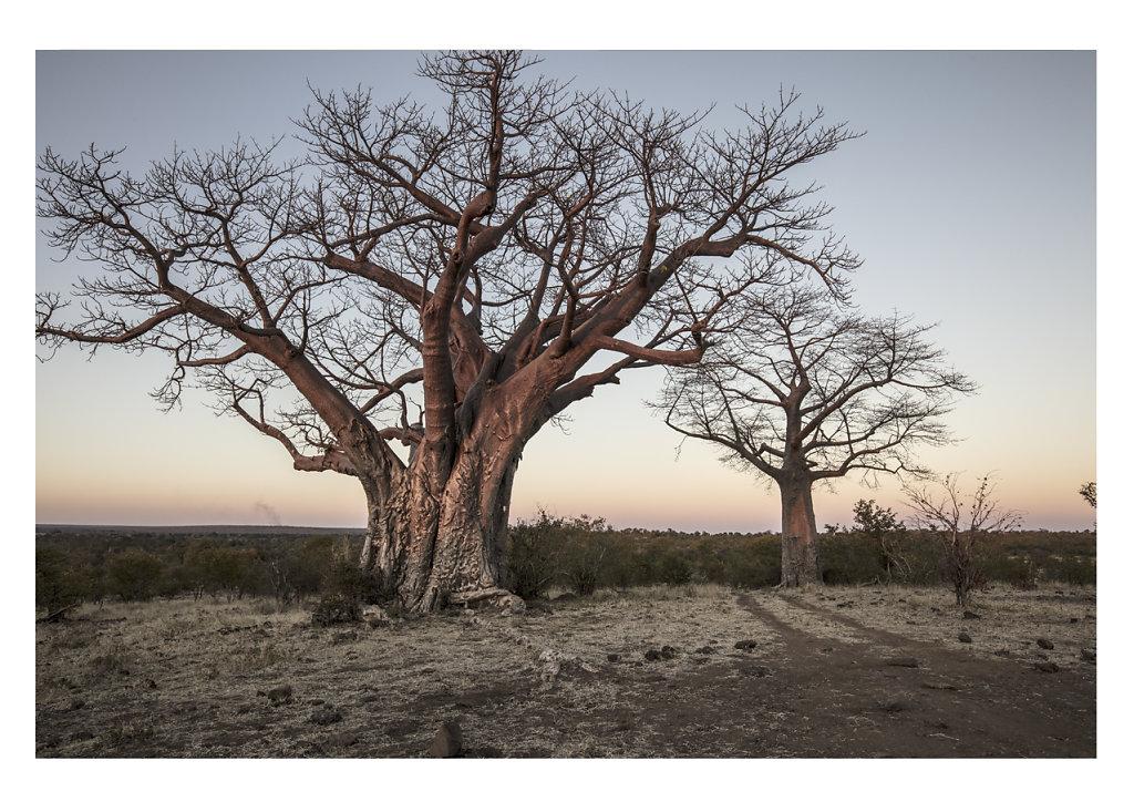 Pierre-BAELEN-Botswana-4.jpg